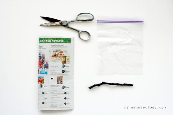 1. Garden Scissors 2. Publix Grocery Flyer 3. Quart size Ziploc bag 4. 7' inch fig tree cutting