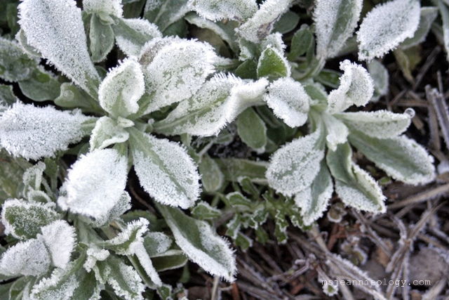 Frost as thick as a blanket!