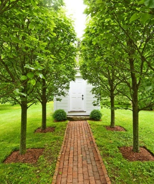 This board contains historic garden designs and layouts. This pear tree allee is modeled after a garden in Historic Williamsburg, VA.