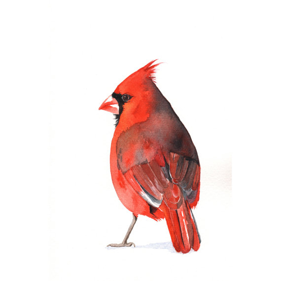 Cardinal Watercolor Painting by Splodgelodge