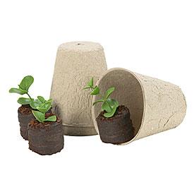 seedpot