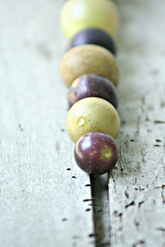Muscadine & Scuppernong Grape photography by sintwister