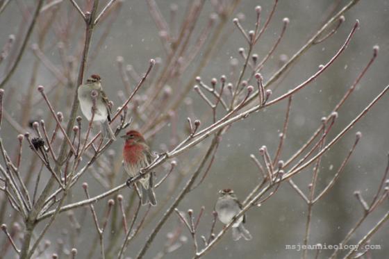 bird5_cluster