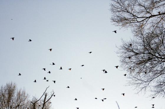 manybirds2