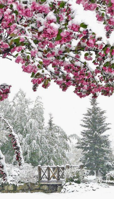 It may not be the historic streets of Paris but, as the seasons kiss in Calgary, you can sense just as much romance in the landscape! Photo via pinterest