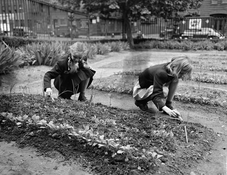 Victory Garden. Photo via pinterest