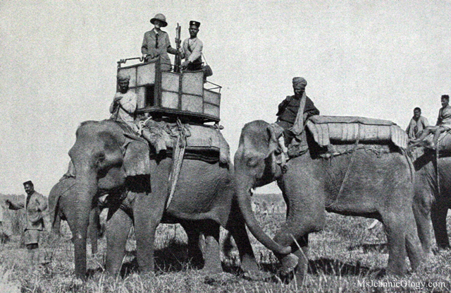 Belle Wyatt Roosevelt on her Howdah Elephant