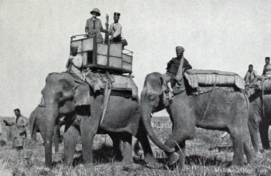Belle Wyatt Roosevelt on her Howdah Elephant