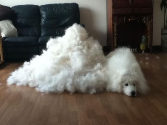 Their mountains of dog hair! Photo via pinterest.