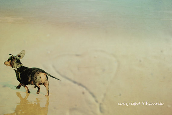Puppy Love Photograph by Kalstek Photography, $33.00