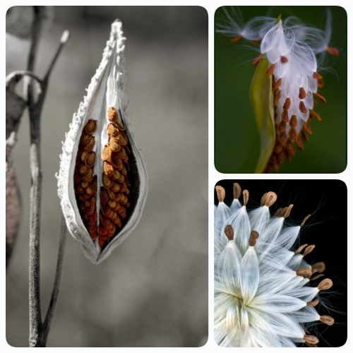 seed pods!