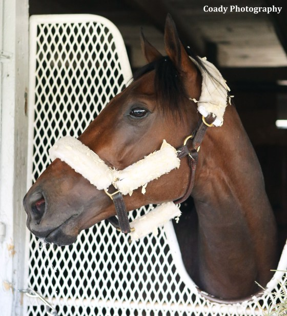 Nyquist's photo courtesy of Coady Photography