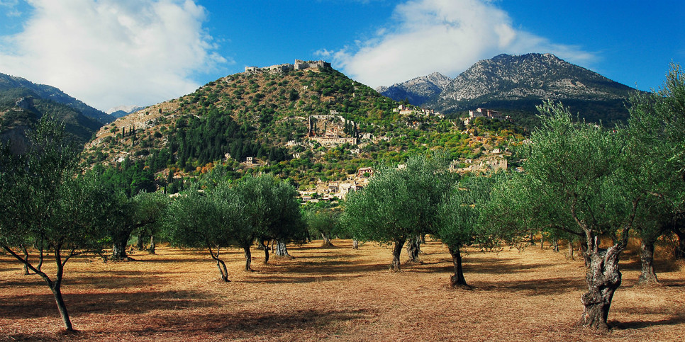 View from the olive groves!