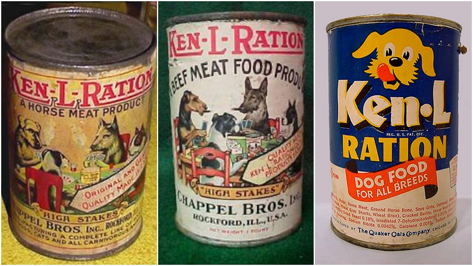 Should Cats Eat Canned Dog Food