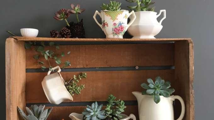 vintage-serving-dish-succulent-planters