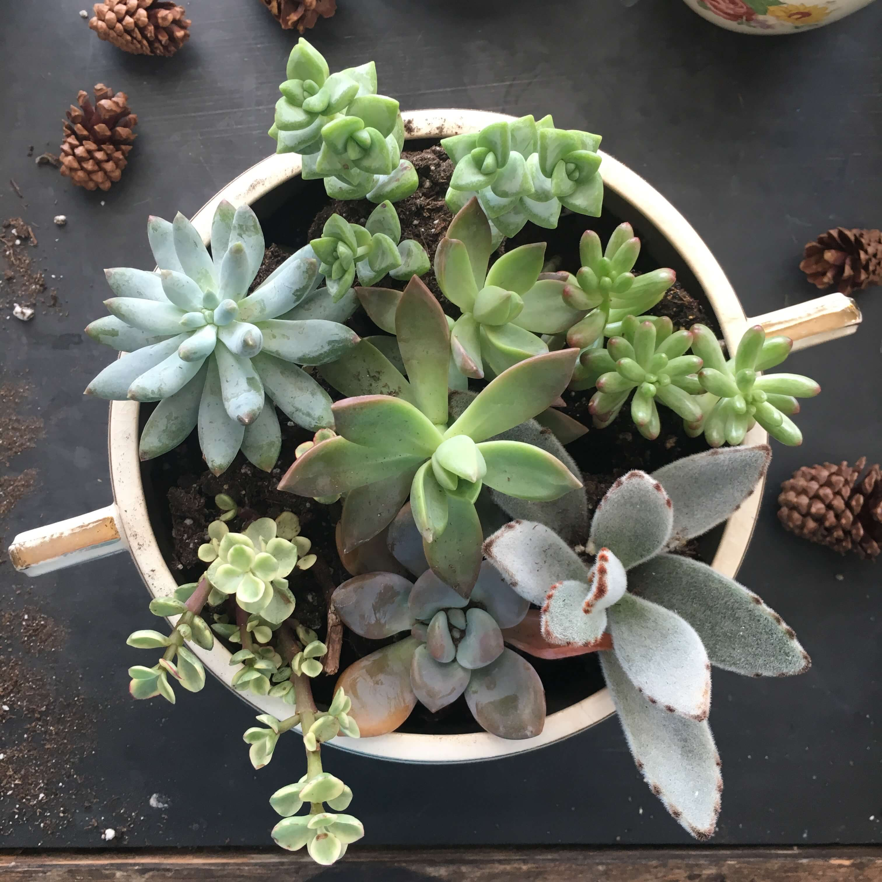 vintage-mini-succulent-garden
