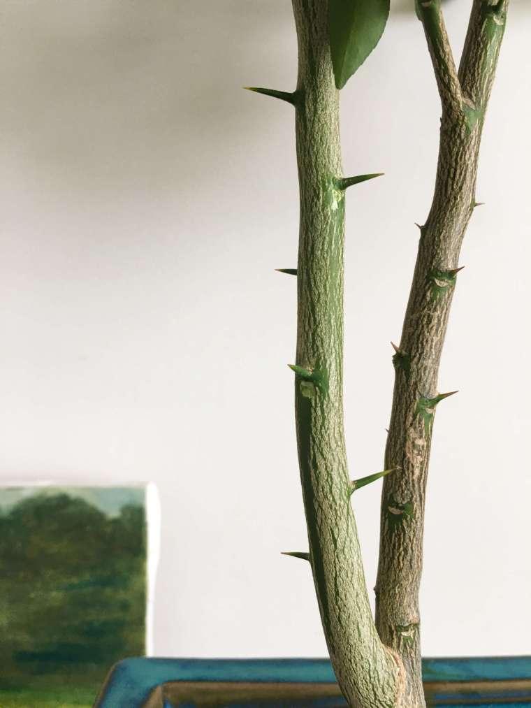 grapefruit-tree-thorns